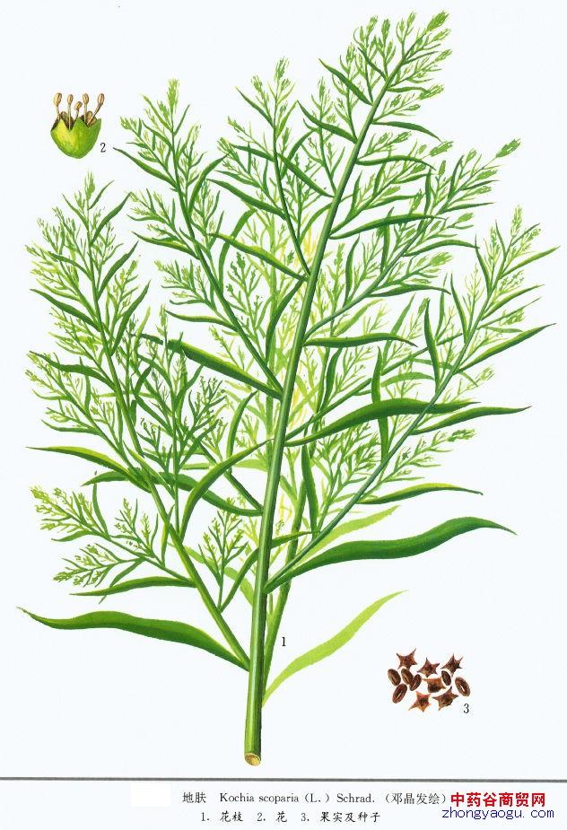 双子叶植物根横切初生结构简图