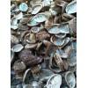 石决明   海螵蛸